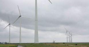 De Meilandjes … tussen de windturbines …?
